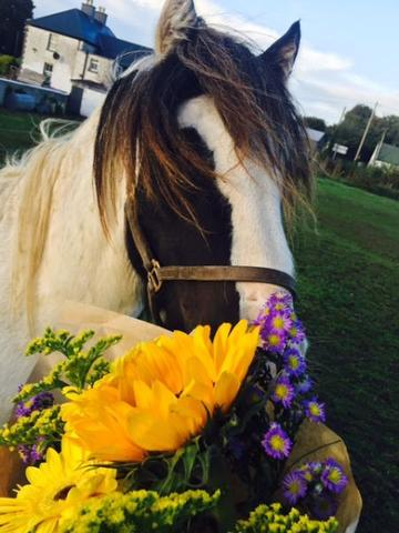 My Lovely Horse Rescue Image 1
